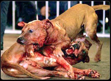 dogfight1